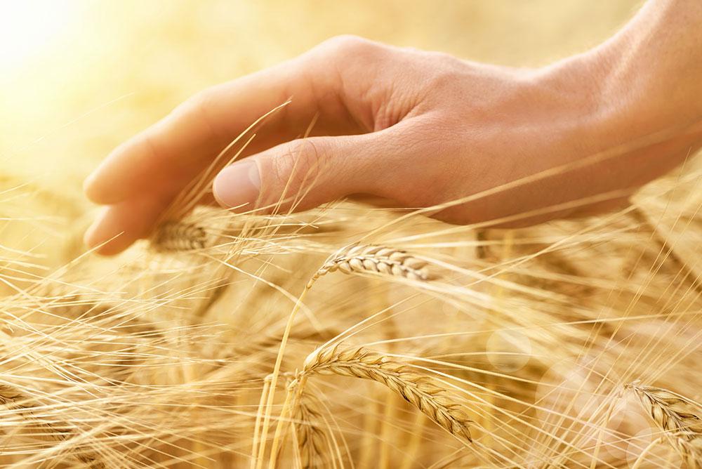 Getreide/Ölsaaten